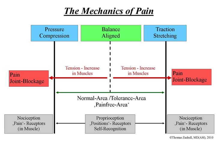 About Back Pain The Theory